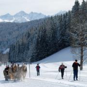 Pferdeschlitten im Winterurlaub Ramsau am Dachstein